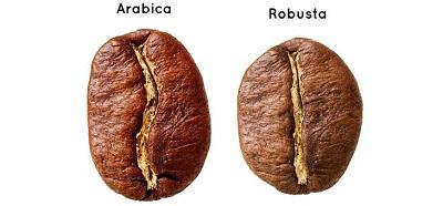 cà phê arabica và rubusta