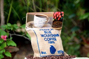 cà phê blue mountain