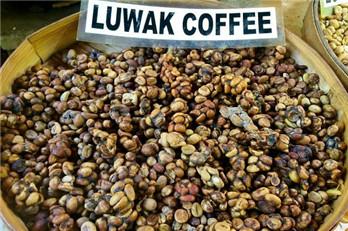 cà phê luwak