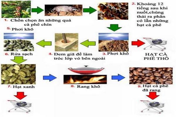 Quy trình sản xuất hạt cà phê