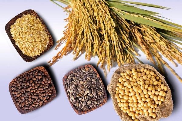 Công dụng của các loại hạt