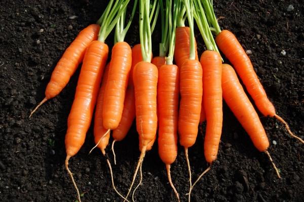 Cà rốt chứa nhiều chất xơ
